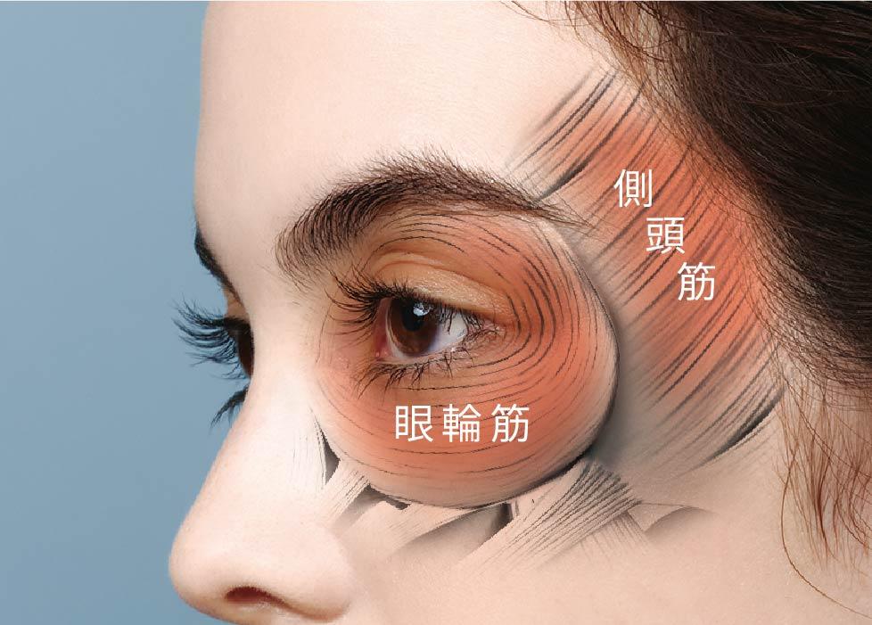 眼輪筋 側頭筋